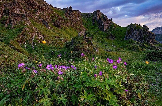 Mountain flowers in midsummer night