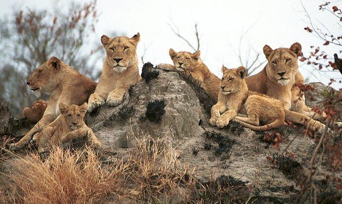 Spectators to the Hunt