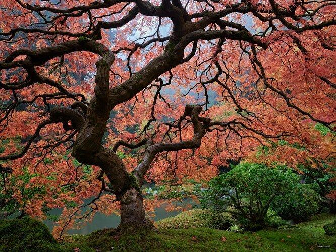 The Tree, Through the Seasons