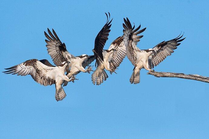 Osprey Precision Landing