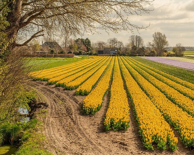 Spring in Holland