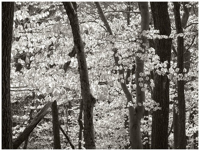 A Moment in Spring