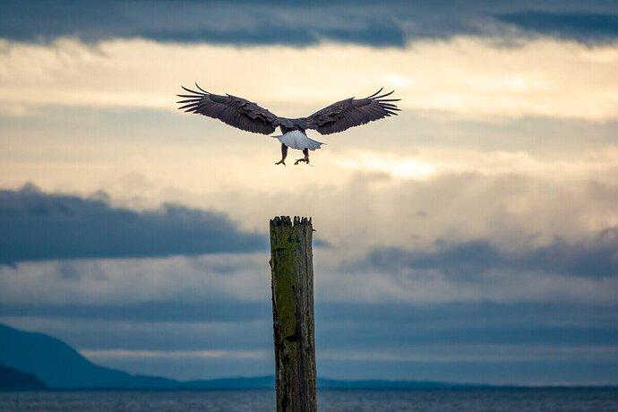 Landing for breakfast