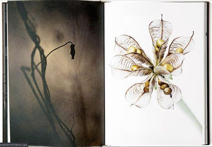 flora supersum book by Lena Granfelt - from website