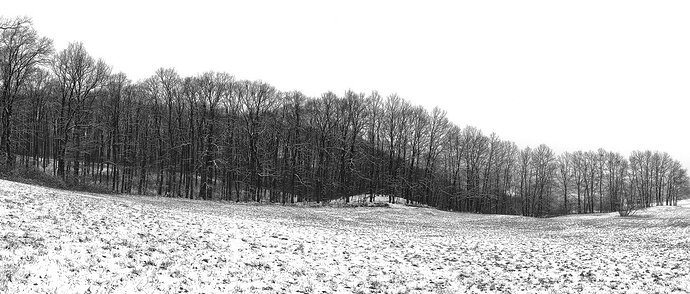 Vienna Woods on a Winter Day